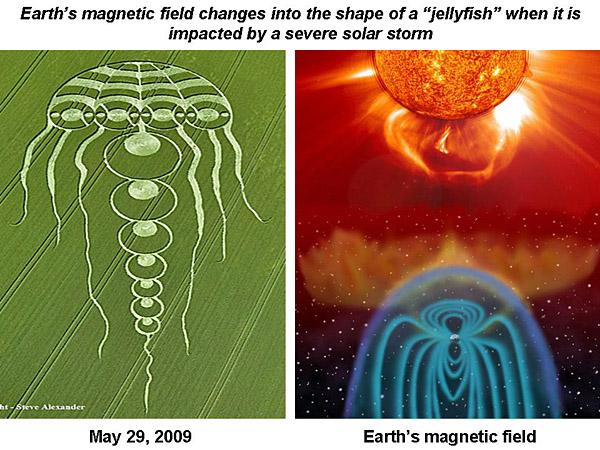 jellyfishwhut